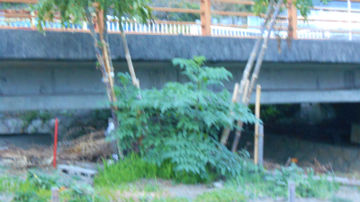 f:id:kabutoyama-tigers:20121111143640j:image