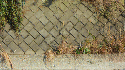 f:id:kabutoyama-tigers:20121118040340j:image