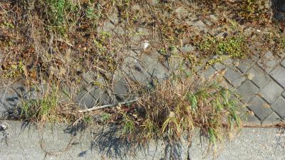 f:id:kabutoyama-tigers:20121118044909j:image