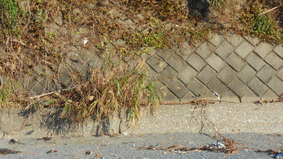 f:id:kabutoyama-tigers:20121118051836j:image