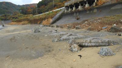 f:id:kabutoyama-tigers:20121125105814j:image
