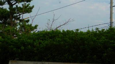 f:id:kabutoyama-tigers:20121127134826j:image