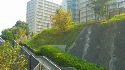 f:id:kabutoyama-tigers:20121128012741j:image