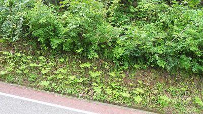 f:id:kabutoyama-tigers:20121229092930j:image