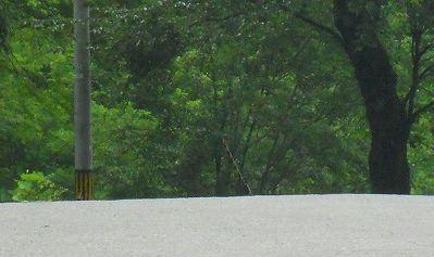 f:id:kabutoyama-tigers:20121229095135j:image