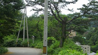 f:id:kabutoyama-tigers:20121229113617j:image