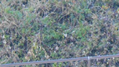 f:id:kabutoyama-tigers:20121231201133j:image