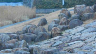 f:id:kabutoyama-tigers:20121231203201j:image
