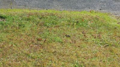 f:id:kabutoyama-tigers:20130108174206j:image