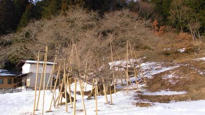 f:id:kabutoyama-tigers:20130210150934j:image