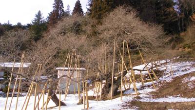 f:id:kabutoyama-tigers:20130210201651j:image
