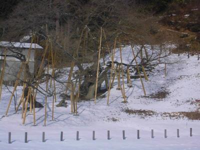 f:id:kabutoyama-tigers:20130211153157j:image