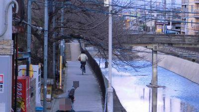 f:id:kabutoyama-tigers:20130227194335j:image
