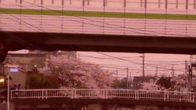 f:id:kabutoyama-tigers:20130406164107j:image