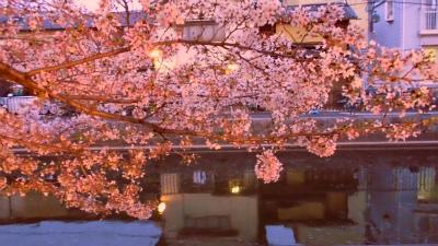 f:id:kabutoyama-tigers:20130406201805j:image