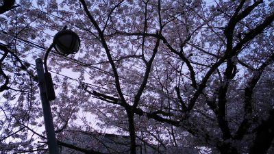 f:id:kabutoyama-tigers:20130406211506j:image