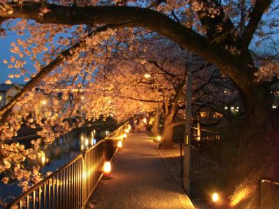 f:id:kabutoyama-tigers:20130406222635j:image