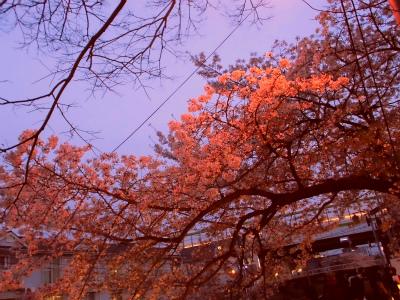 f:id:kabutoyama-tigers:20130406222641j:image