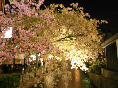 f:id:kabutoyama-tigers:20130406223721j:image