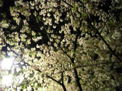 f:id:kabutoyama-tigers:20130406225218j:image