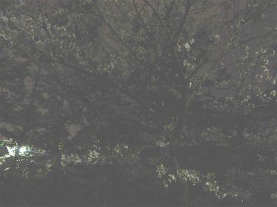 f:id:kabutoyama-tigers:20130406225220j:image