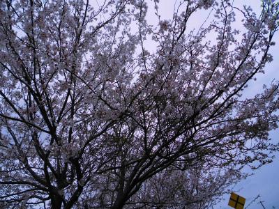 f:id:kabutoyama-tigers:20130429153144j:image