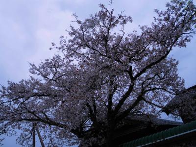f:id:kabutoyama-tigers:20130429153145j:image