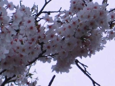 f:id:kabutoyama-tigers:20130430200505j:image