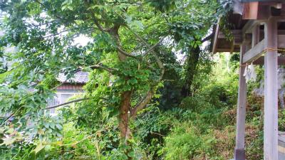 f:id:kabutoyama-tigers:20130708154616j:image