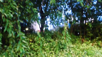 f:id:kabutoyama-tigers:20130717141501j:image