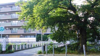 f:id:kabutoyama-tigers:20130724080119j:image