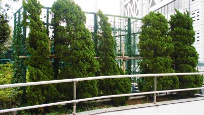 f:id:kabutoyama-tigers:20130805163603j:image