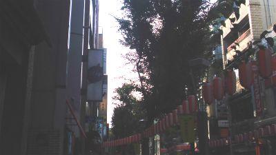 f:id:kabutoyama-tigers:20130805170237j:image