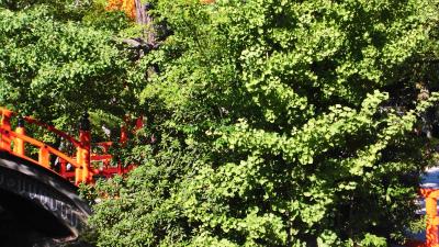 f:id:kabutoyama-tigers:20130806201218j:image