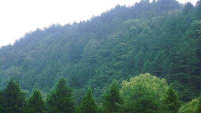 f:id:kabutoyama-tigers:20130912093159j:image