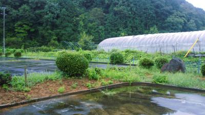 f:id:kabutoyama-tigers:20130912112240j:image