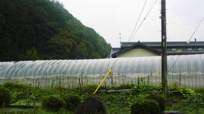 f:id:kabutoyama-tigers:20130912113339j:image