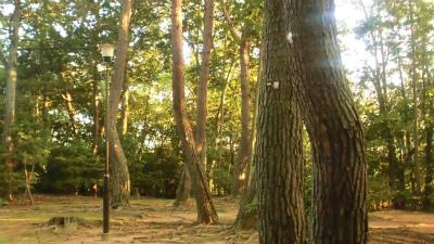f:id:kabutoyama-tigers:20130924140228j:image