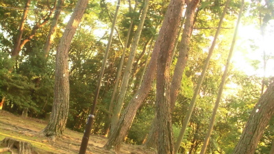 f:id:kabutoyama-tigers:20130924211529j:image