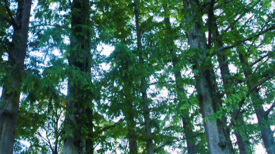 f:id:kabutoyama-tigers:20131006205914j:image