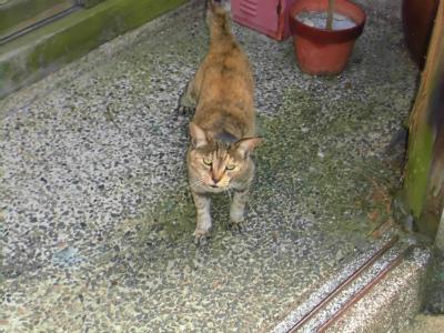 f:id:kabutoyama-tigers:20131020122922j:image