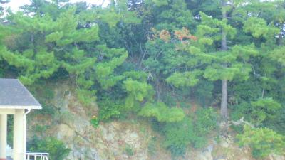 f:id:kabutoyama-tigers:20131116000953j:image