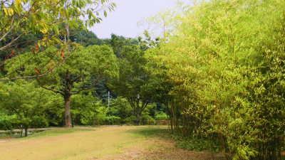 f:id:kabutoyama-tigers:20131123024823j:image