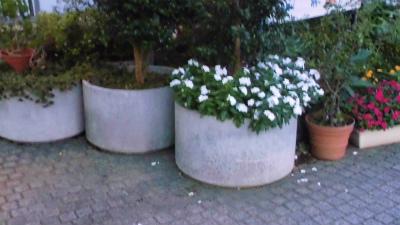 f:id:kabutoyama-tigers:20131214042535j:image