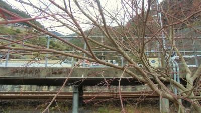 f:id:kabutoyama-tigers:20131215194417j:image