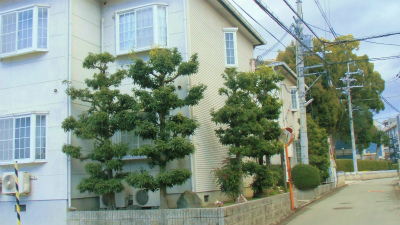 f:id:kabutoyama-tigers:20140118151339j:image