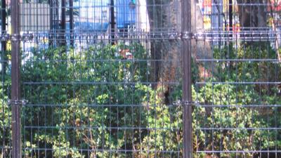 f:id:kabutoyama-tigers:20140122135426j:image
