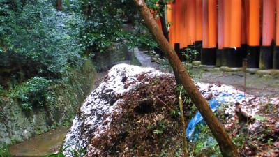 f:id:kabutoyama-tigers:20140210063618j:image