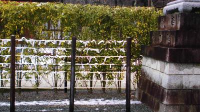 f:id:kabutoyama-tigers:20140210100448j:image