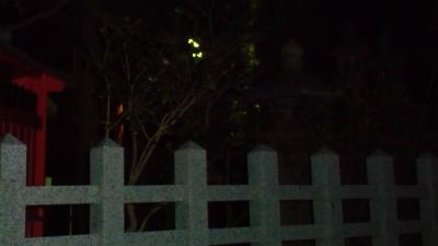 f:id:kabutoyama-tigers:20140223080222j:image